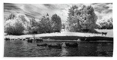Swimming With Cows II Beach Towel by Paul Seymour