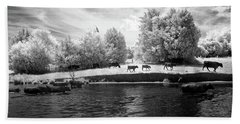 Swimming With Cows Beach Towel by Paul Seymour