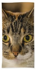 Symmetrical Cat Beach Towel