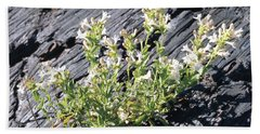 T-107709 Hot Rock Penstemon Beach Sheet