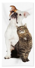 Tabby Cat And Bulldog Together Looking Up Beach Towel