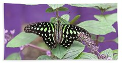 Tailed Jay Butterfly In Puple Beach Towel