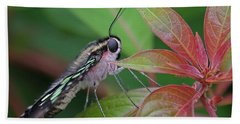 Tailed Jay Butterfly Macro Shot Beach Sheet