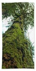 Tall Tall Tree Beach Sheet