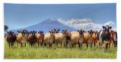 Taranaki Cows Beach Sheet