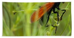Tarantula Hawk 1 Beach Towel