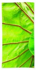 Taro Leaf Close Up In Green Beach Towel