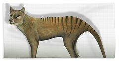 Tasmanian Tiger-thylacinus Cynocephalus-tasmanian Wolf-lobo De Tasmania-tasmanian Loup-beutelwolf    Beach Towel