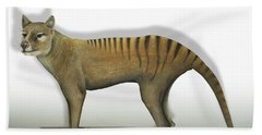 Tasmanian Tiger-thylacinus Cynocephalus-tasmanian Wolf-lobo De Tasmania-tasmanian Loup-beutelwolf    Beach Sheet
