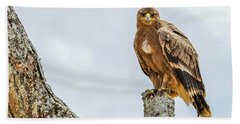Tawny Eagle Beach Sheet