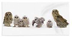 Tawny Owl Family Beach Sheet