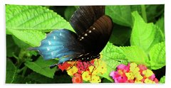 Tennessee Blue And Black Wing Butterfly Beach Sheet