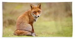 That Look - Red Fox Male Beach Towel