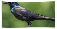 Beach Towel featuring the photograph The Beautiful Common Grackle by Ricky L Jones