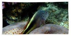 The Blackside Hawkfish Red Sea Beach Towel
