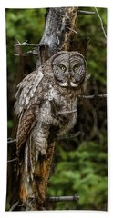 The Captivating Great Grey Owl Beach Towel by Yeates Photography