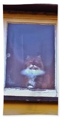 The Cat In The Window Beach Towel