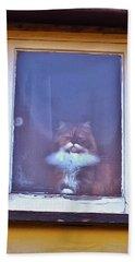The Cat In The Window Beach Towel by Anne Kotan