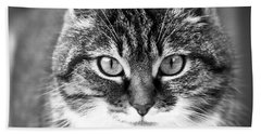 The Cat Stare Down Beach Sheet