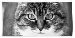 The Cat Stare Down Beach Towel