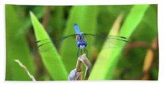 The Dragonfly Beach Sheet