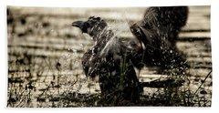 The Eastern Jungle Crow Corvus Macrorhynchos Levaillantii Beach Sheet