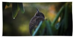 The Eurasian Blackbird Female In Spring Morning Beach Towel