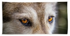 Beach Towel featuring the photograph The Eyes Of A Great Grey Wolf by Teri Virbickis