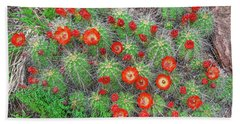 The First Week Of May, Claret Cup Cacti Begin To Bloom Throughout The Colorado Rockies.  Beach Towel by Bijan Pirnia