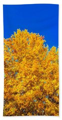 The Flare Of Fall On A Clear Day Beach Towel