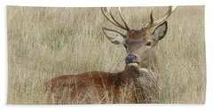 The Gentle Stag Beach Towel by LemonArt Photography
