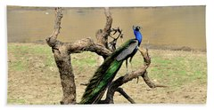 The Indian Peafowl Beach Towel