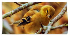 Beach Sheet featuring the photograph The Inquisitive Goldfinch by John Harding