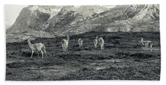 Beach Towel featuring the photograph The Lamas by Andrew Matwijec