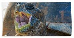 The Laughing Tortoise Beach Sheet