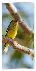 The Lesser Goldfinch Beach Towel