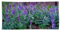 Beach Sheet featuring the photograph The Lupine Convention by Jennifer Lake