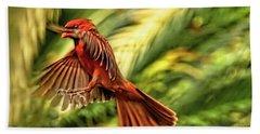 The Male Cardinal Approaches Beach Sheet