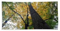 The Mighty Tulip Popular State Tree Of Indiana Beach Towel