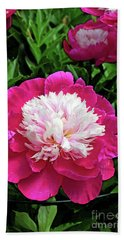The Most Beautiful Peony Beach Sheet