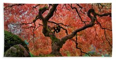 The Old Japanese Maple Tree In Autumn Beach Sheet