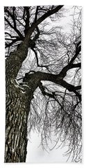 The Old Tree Beach Towel