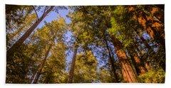 The Portola Redwood Forest Beach Towel