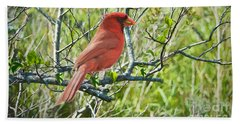 The Red Cardinal Beach Towel