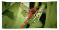 The Red Dragonfly Nbr.1 Beach Towel