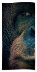 The Shy Orangutan Beach Towel