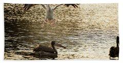The Spot-billed Pelican Or Grey Pelican  Pelecanus Philippensis  Beach Sheet