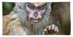 The Stare A Baby Patas Monkey  Beach Sheet by Jim Fitzpatrick