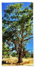 Beach Towel featuring the photograph The Turtleback Tree by Lorraine Devon Wilke