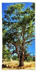 The Turtleback Tree Beach Sheet